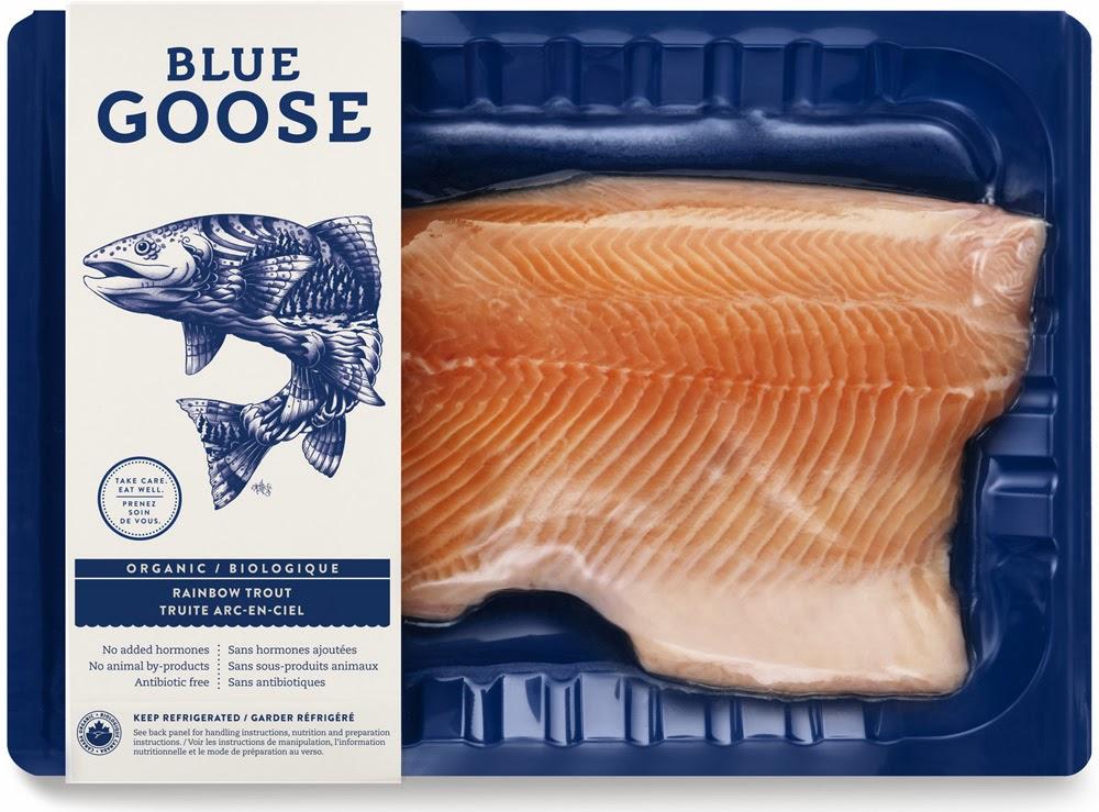 Blue_Goose_4