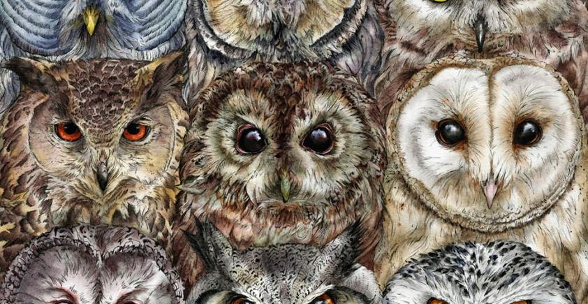Ilustracje Faryn Hughes