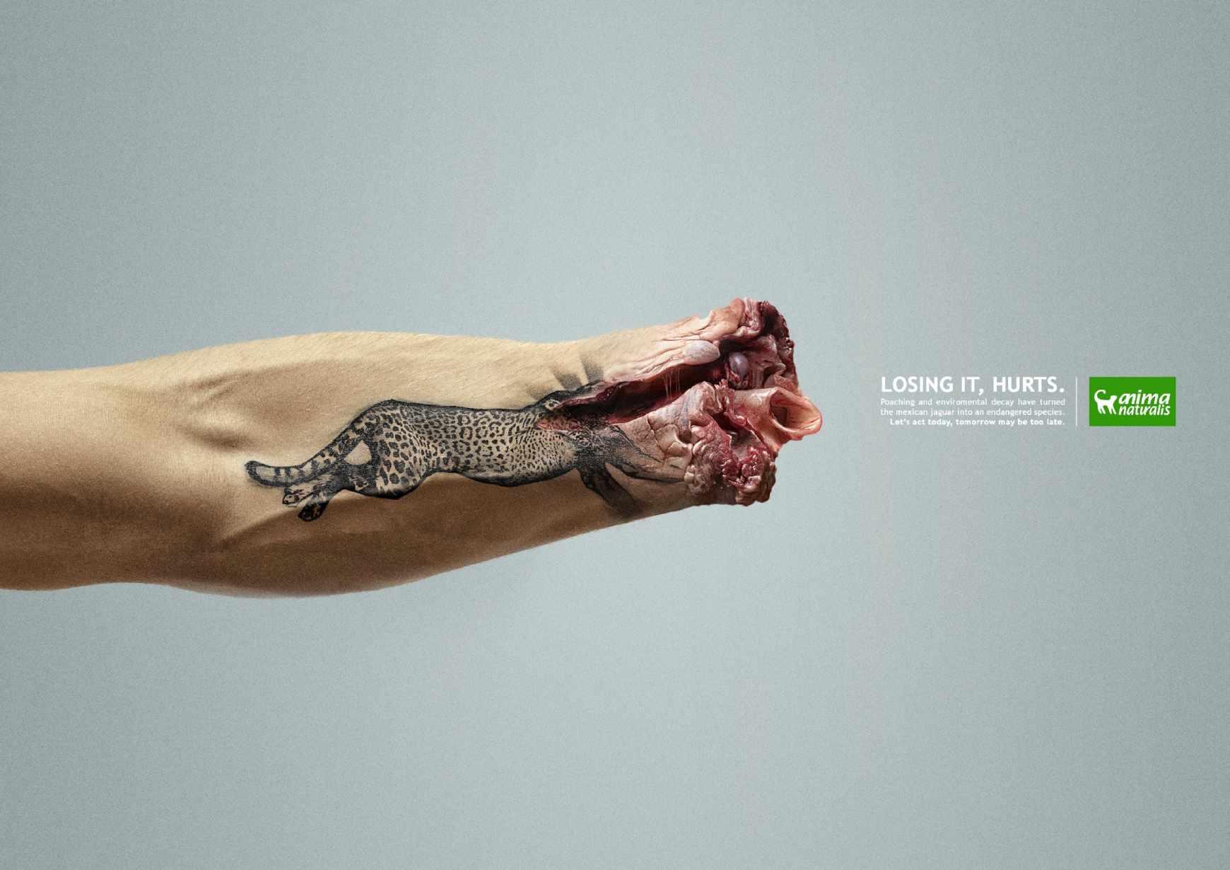 print-jaguar_aotw