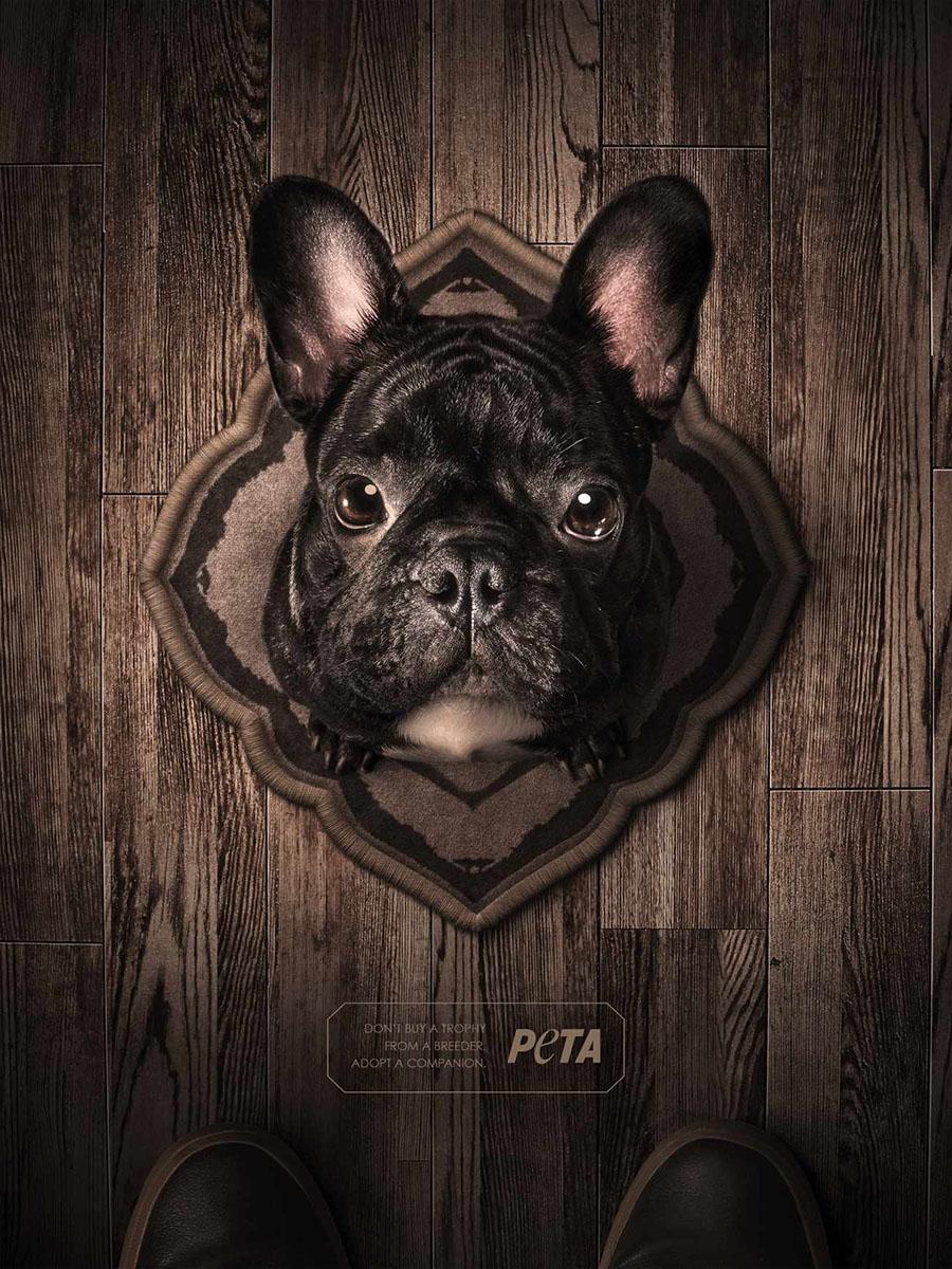 05103_lfsbr_yr_peta_cannes_bulldog_rtf_crop_aotw