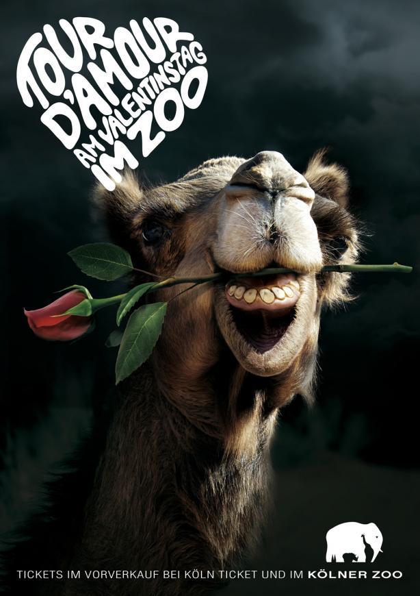 a4_poster_print_camel
