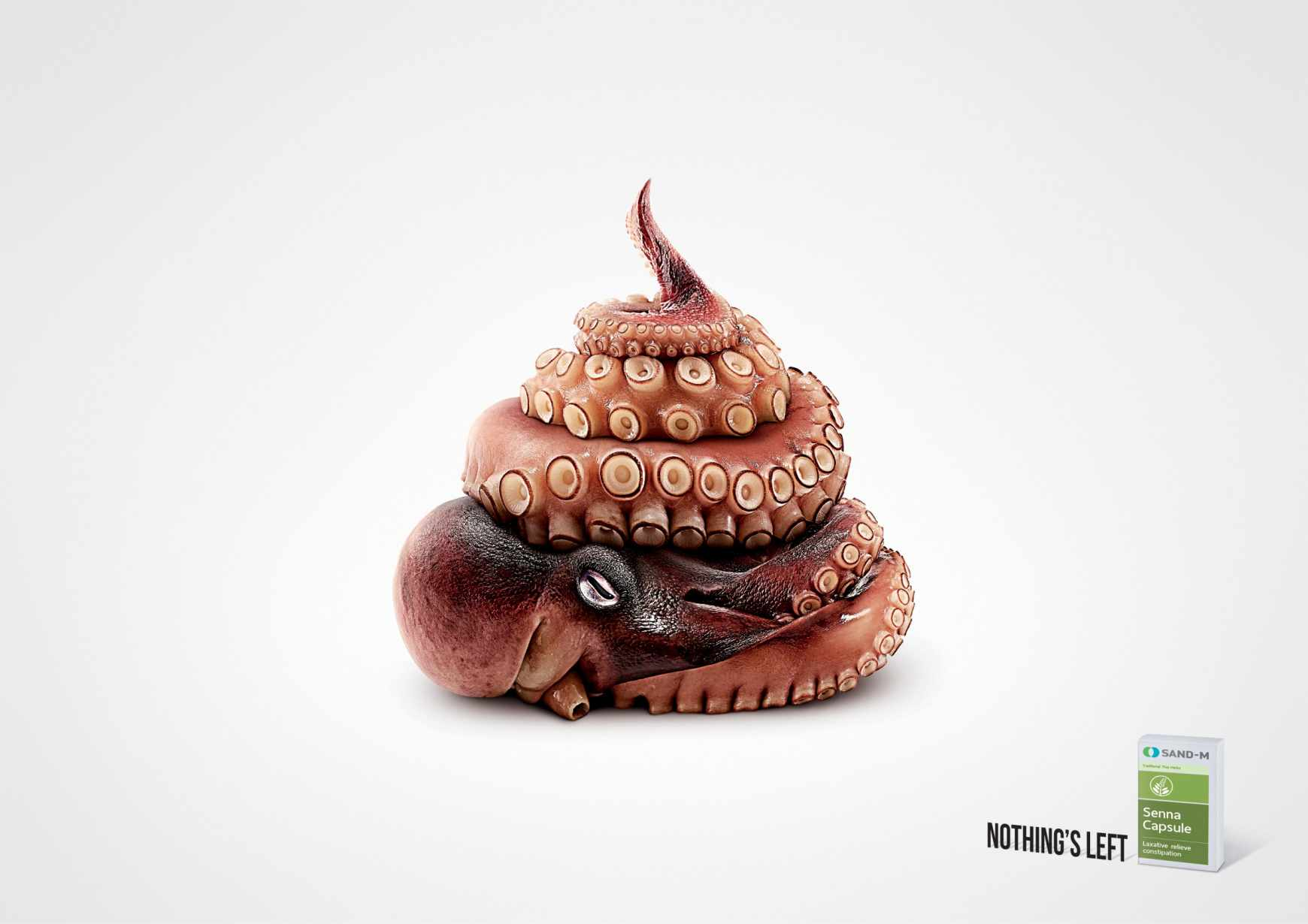 1_octopus_aotw