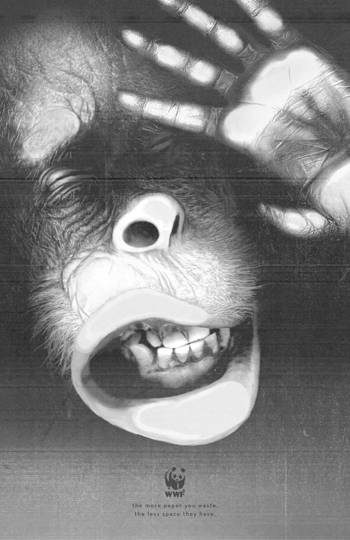 orangutan_final2_aotw