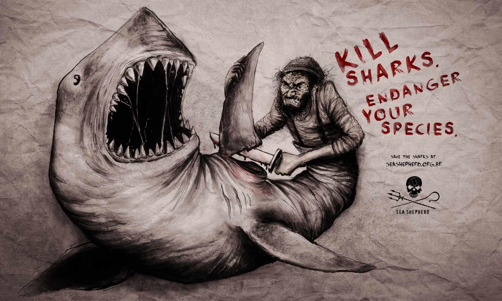 species_shark